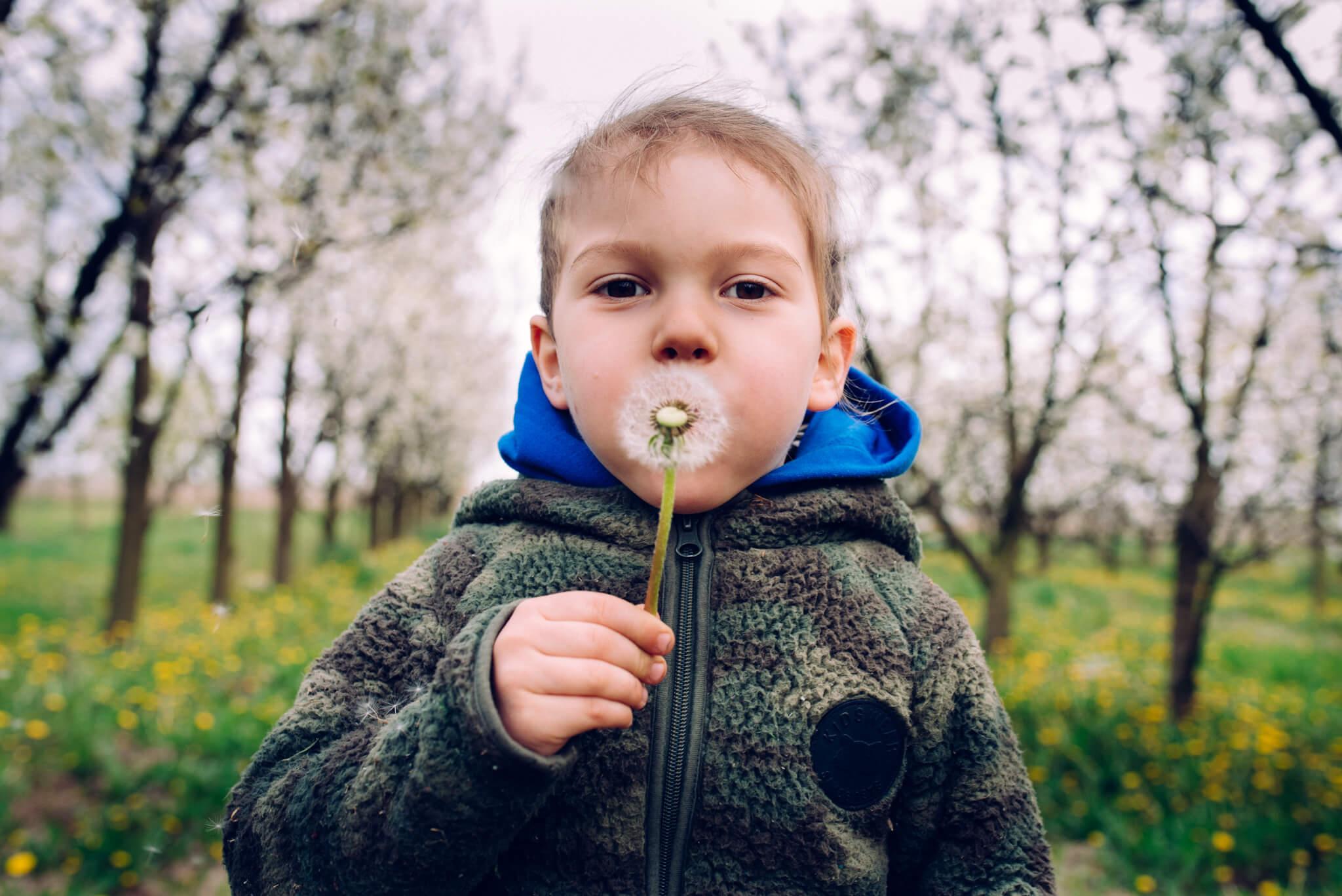 chłopczyk dmuchający w dmuchawiec podczas sesji rodzinnej w sadzie